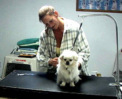 Paws denvers best pet groomer pat is the groomer who solutioingenieria Image collections