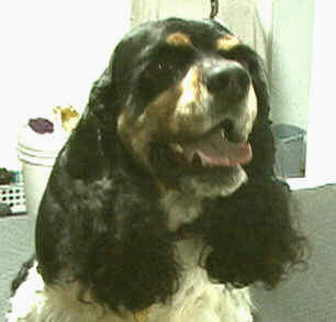 Paws denvers best pet groomer will leave your pet beautiful solutioingenieria Image collections